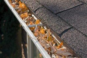 leafs in gutter