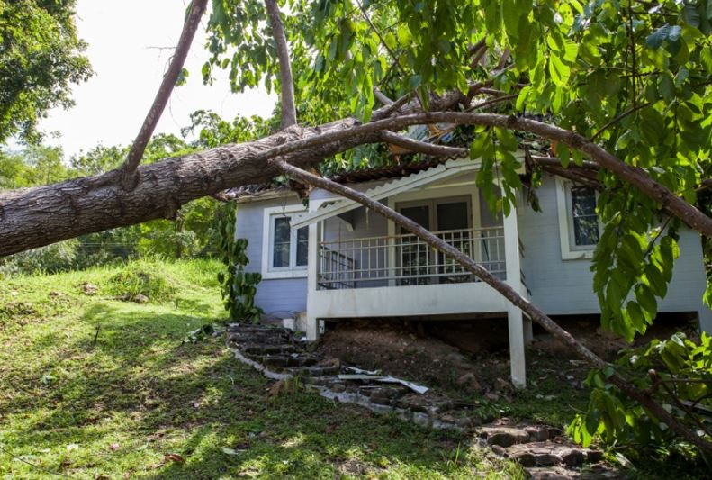 clearwater florida tree damage roof