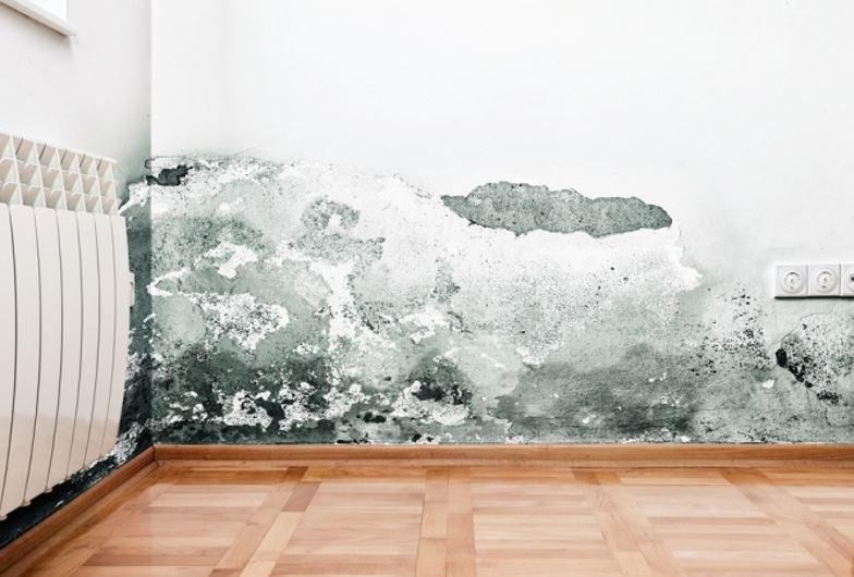st petersburg florida wall damage